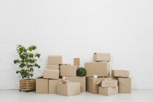 Moving Plants To Your New Home safely: 4 tips